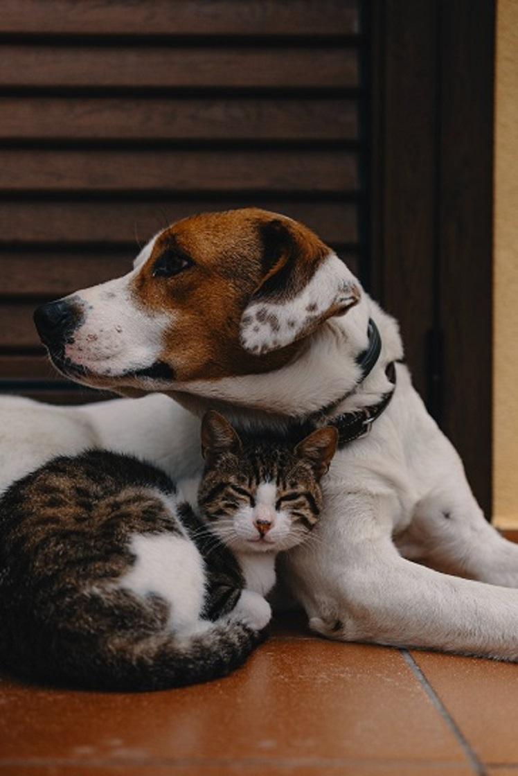 Haustierbesitzer